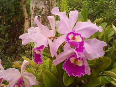 Premio nacional a cultivador pinareño de orquídeas