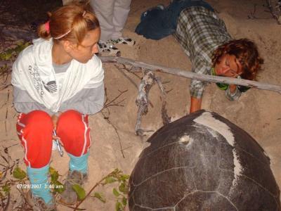 Refuerzan vigilancia a tortugas marinas en período de desove