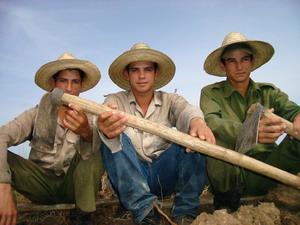 ¿A QUÉ EDAD BUSCAN EL PAN LOS HOMBRES EN CUBA?