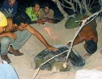 Guanahacabibes, tortugas, iguanas, naturaleza