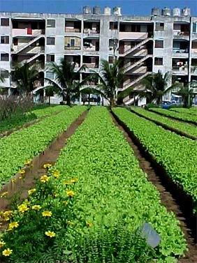 Entregan tierra a más de 100 000 usufructuarios en Cuba